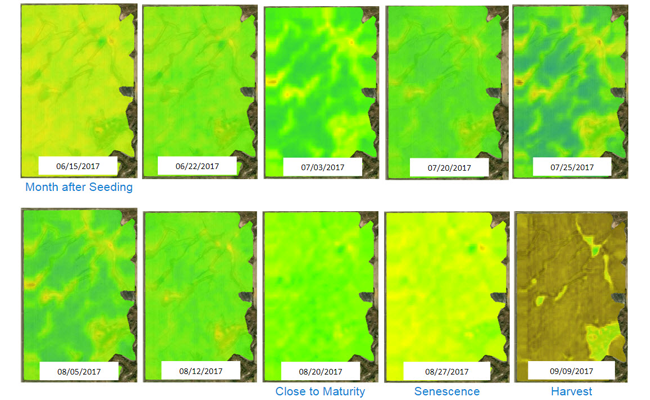 Crop Health Imagery Calibration