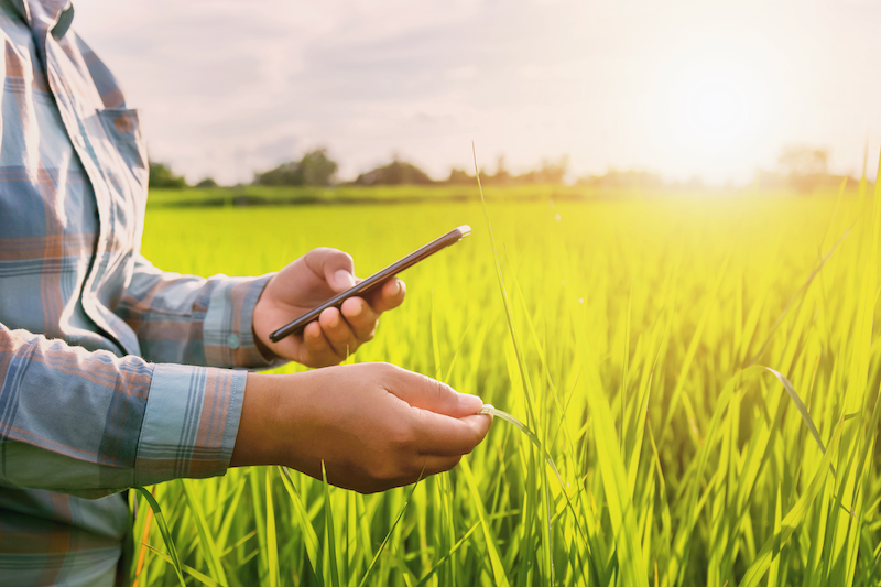 Image of a farmer using phone app in field.